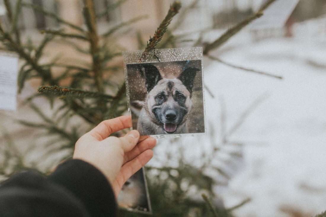 Teistmoodi jõulupuu leiab loomadele kodu